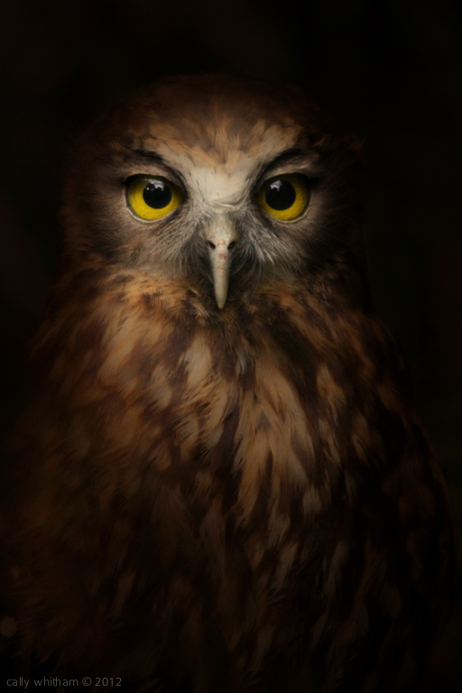 Ruru, the Morepork